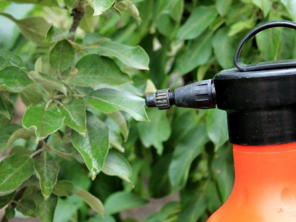 Профилактические меры уберегут здоровье растения