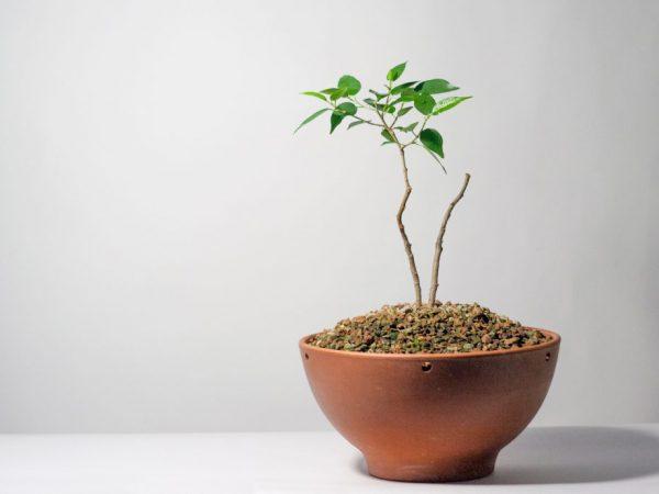 Подкормки помогают растению развиваться