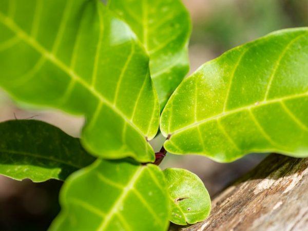 Растение может заболеть от неправильного полива
