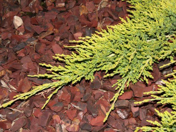 Мульчирование не дает сорнякам разрастаться