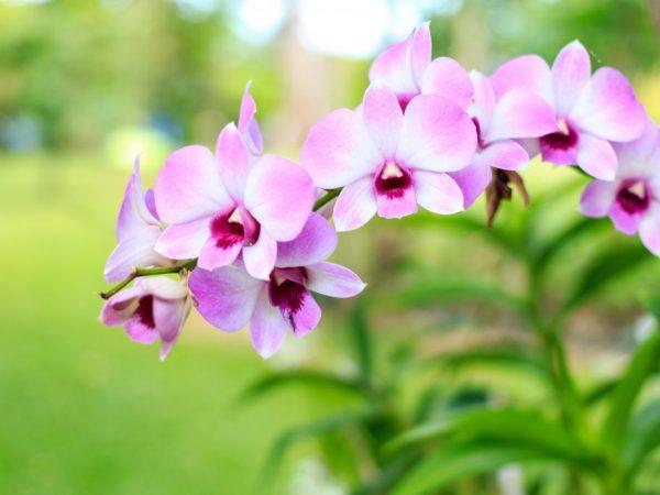 Раствор помогает растению зацвести