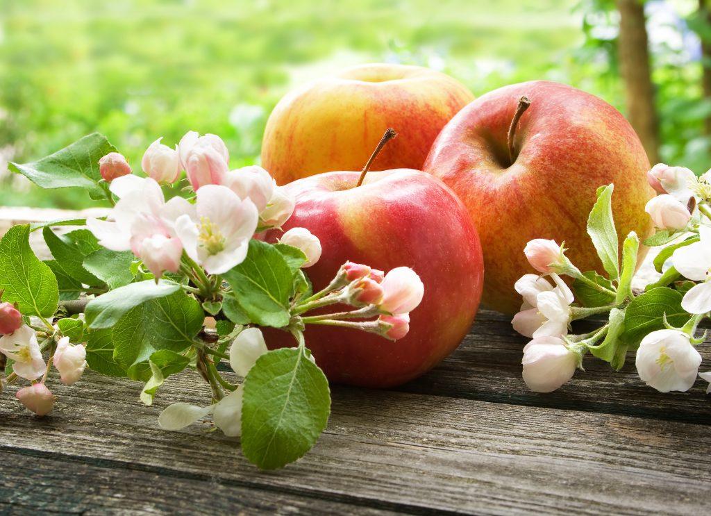 картинки яблоки в цвету и с плодами шах