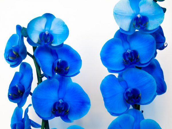 При нарушении климата цветы болеют