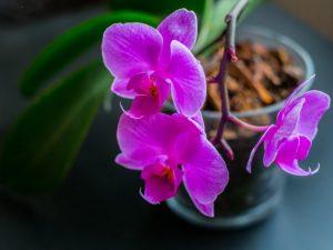 Разные приметы и суеверия про орхидею