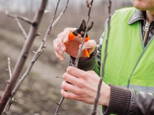 Весенняя обрезка яблонь: пособие для начинающих садоводов