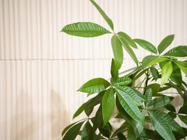 Почву для растения можно сделать в домашних условиях