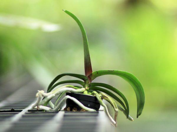 Орхидеи не выносят холода