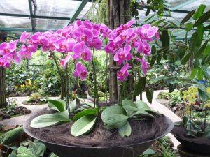 Садовые орхидеи — описание разных сортов