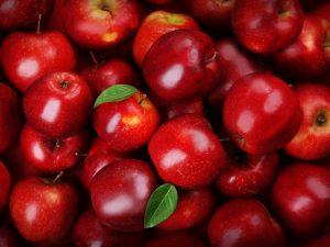 Сорт яблони Афродита — урожайность