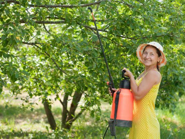 Обработка сохранит здоровье растений