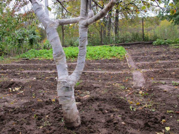 Регулярная обработка поможет сохранить здоровье дерева