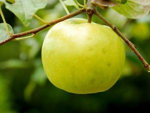Яблоня Чудное — основные сведения о сорте