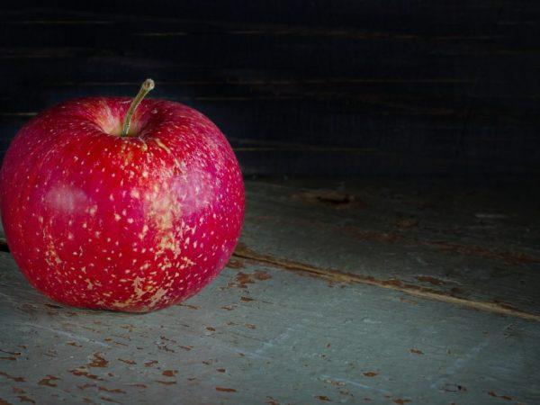 Описание, правила посадки и ухода за яблоней дарунок