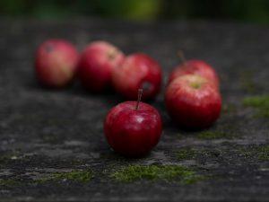Яблоня Либерти — как вырастить плодовитое дерево