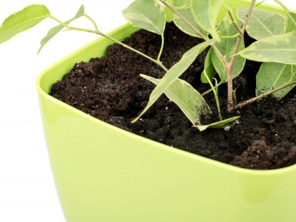 За растением нужно хорошо ухаживать