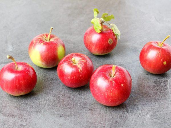Минеральные удобрения влияют на плодоношение