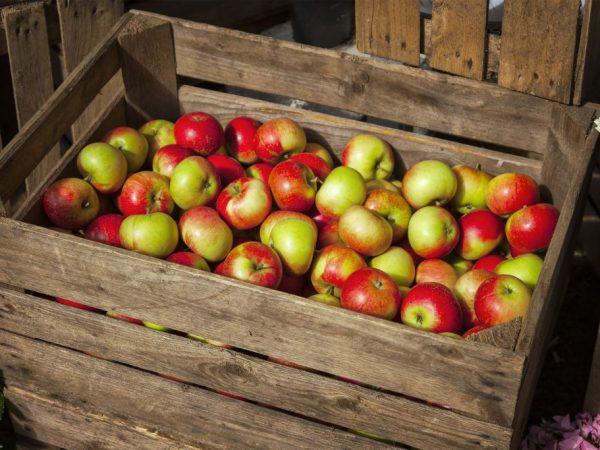 Плоды разных сортов нужно хранить отдельно