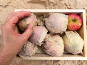 Правила хранения яблок зимой в погребе — организация помещения