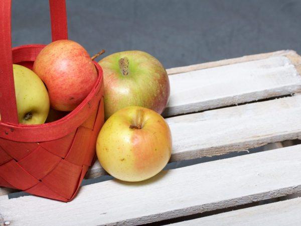 Плоды обладают приятным вкусом