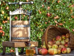 Пресс для переработки яблок — как смонтировать устройство
