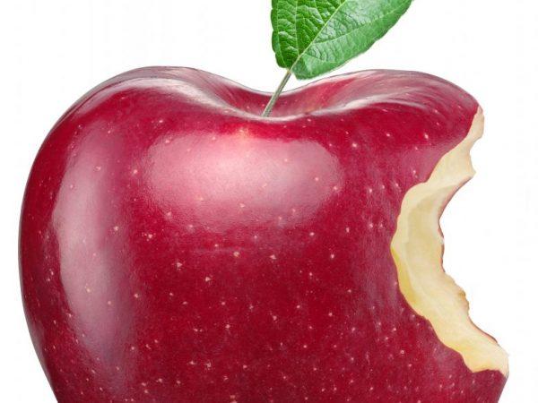 Яблоня Антей — описание сорта