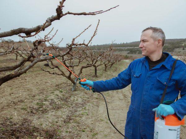 Как проводить весеннюю подкормку яблонь