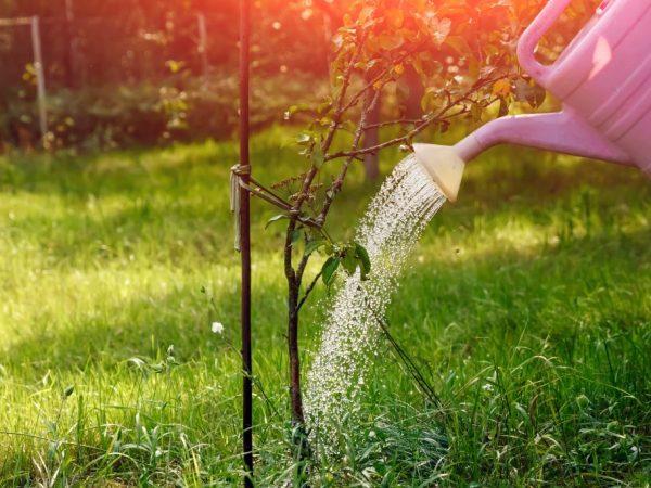 Количество удобрений зависит от возраста растения