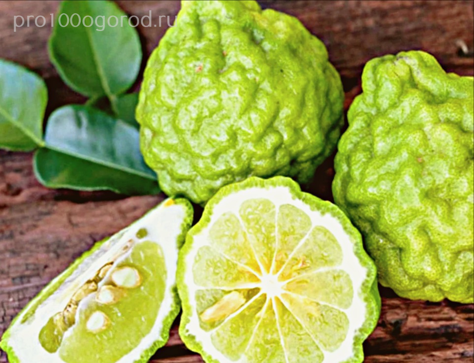 plod-bergamota